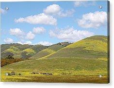 Mustard On Nipomo Hills Acrylic Print