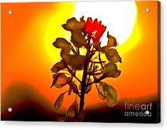 Mustard Sunset Acrylic Print