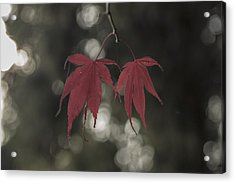 Muted Fall Colrs Acrylic Print