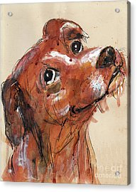 Mutt Acrylic Print by Doris Blessington