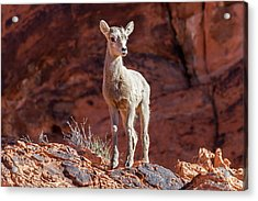 Mutual Curiosity   Acrylic Print by James Marvin Phelps