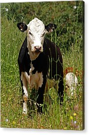 Acrylic Print featuring the photograph Muuuu by Arik Baltinester