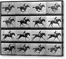 Muybridge Locomotion Racehorse Acrylic Print by Photo Researchers