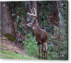 Acrylic Print featuring the photograph My Best Side by Douglas Stucky