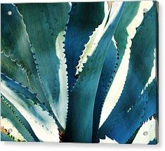 My Blue Agave Acrylic Print