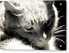 My Buddy Acrylic Print by Edward Myers
