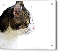 My Cat Acrylic Print