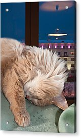 Acrylic Print featuring the photograph My Cat by Vladimir Kholostykh