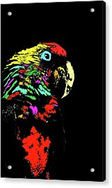 My Colorful Mccaw Acrylic Print