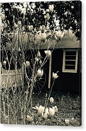 My Daughters Magnolia Acrylic Print