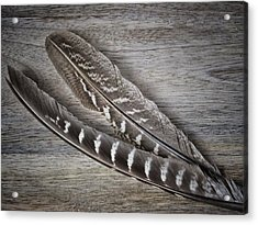 My Fabulous Feathery Find. Acrylic Print by Karen Stahlros