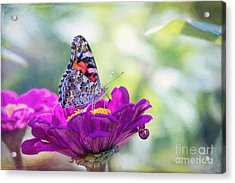 My Fair Painted Lady Acrylic Print