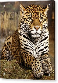 My Favorite Cat Acrylic Print