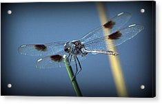 My Favorite Dragonfly Acrylic Print