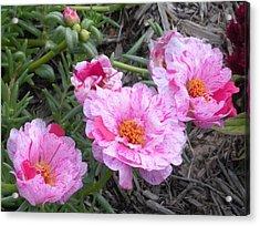 My Favorite Flower Acrylic Print by Jeanette Oberholtzer
