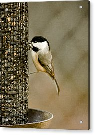 My Favorite Perch Acrylic Print by Lana Trussell