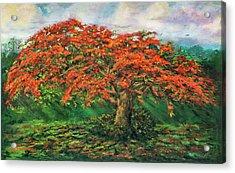 My Flamboyant Tree Acrylic Print