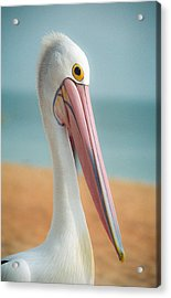 Acrylic Print featuring the photograph My Gentle And Majestic Pelican Friend by T Brian Jones