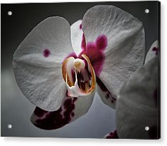 Acrylic Print featuring the photograph My Growling Dragon Orchid. by Karen Stahlros
