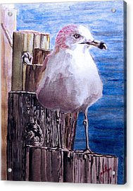 Acrylic Print featuring the painting My Gull by Jim Phillips