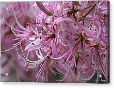 My Heart Is Pink Acrylic Print