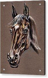 My Horse Portrait Acrylic Print by Daliana Pacuraru