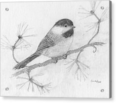 My Little Chickadee Acrylic Print by Cynthia  Lanka