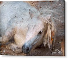 My Little Horse Acrylic Print by Angela Doelling AD DESIGN Photo and PhotoArt