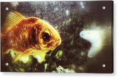 Acrylic Print featuring the photograph My Littlest Fish by Isabella F Abbie Shores FRSA