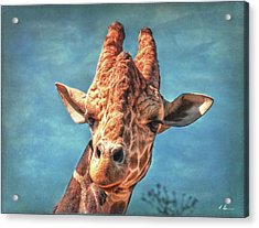 Acrylic Print featuring the photograph My Name Is Bingwa by Hanny Heim