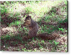 My Nut Acrylic Print by Evelyn Patrick