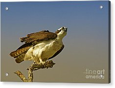 Acrylic Print featuring the photograph My Pose For You by Deborah Benoit