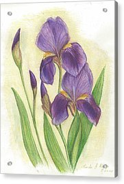 My Purple Irises Acrylic Print