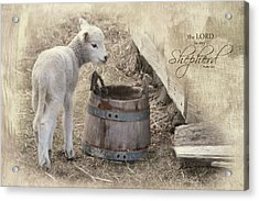 Acrylic Print featuring the photograph My Shepherd by Robin-Lee Vieira