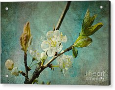 My Springtime Acrylic Print by Angela Doelling AD DESIGN Photo and PhotoArt