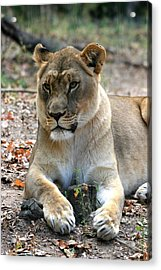 My Stump - You Shall Not Have It Acrylic Print