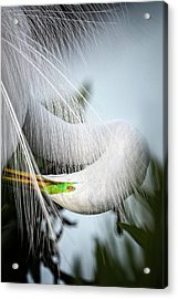 My Veil Of Secrecy Acrylic Print