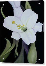 My White Lily Acrylic Print by Mary Gaines