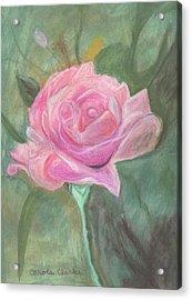 My Wild Irish Rose Acrylic Print by Carole Clark