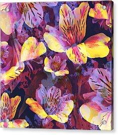 Mysterious Alstroemeria Acrylic Print