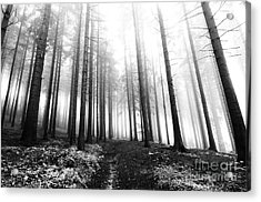 Mysterious Forest Acrylic Print by Michal Boubin