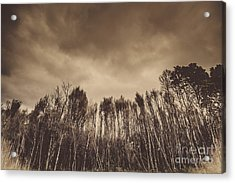Mysterious Scary Forest Acrylic Print