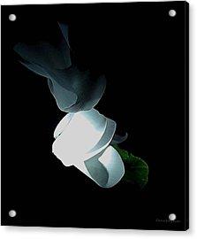 Mystery Flower Acrylic Print