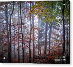 Acrylic Print featuring the photograph Mystery In Fog by Elena Elisseeva