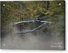 Acrylic Print featuring the photograph Mystery In The Fall by Skip Willits