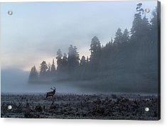 Mystic Elk Acrylic Print
