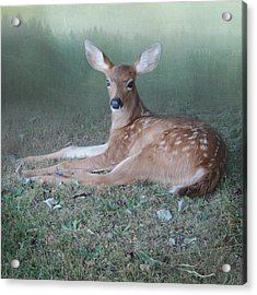 Acrylic Print featuring the photograph Mystic Fawn by Sally Banfill