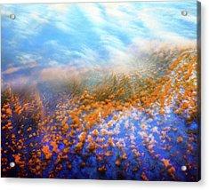 Mystic Field Acrylic Print