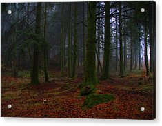 Mystic Forest Acrylic Print by Paulo Antunes