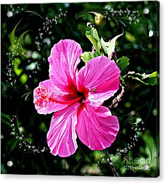 Acrylic Print featuring the photograph Mystical Bloom by The Art of Alice Terrill